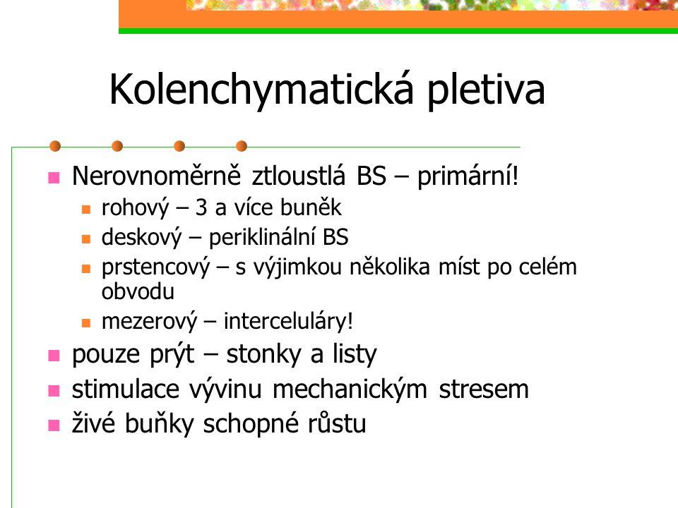 Kolenchymatická pletiva Nerovnoměrně ztloustlá BS – primární! rohový – 3 a více buněk deskový – periklinální BS prstencový – s výjimkou několika míst