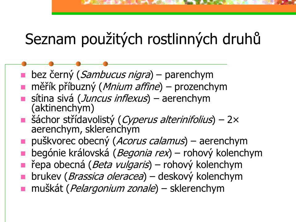 Seznam použitých rostlinných druhů bez černý (Sambucus nigra) – parenchym měřík příbuzný (Mnium affine) – prozenchym sítina sivá (Juncus inflexus) – aerenchym (aktinenchym) šáchor střídavolistý (Cyperus alterinifolius) – 2× aerenchym, sklerenchym puškvorec obecný (Acorus calamus) – aerenchym begónie královská (Begonia rex) – rohový kolenchym řepa obecná (Beta vulgaris) – rohový kolenchym brukev (Brassica oleracea) – deskový kolenchym muškát (Pelargonium zonale) – sklerenchym