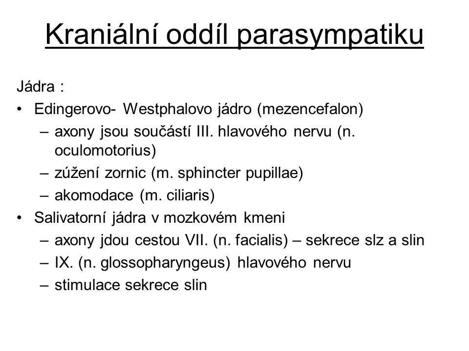 Kraniální oddíl parasympatiku Jádra : Edingerovo- Westphalovo jádro (mezencefalon) –axony jsou součástí III. hlavového nervu (n. oculomotorius) –zúžen