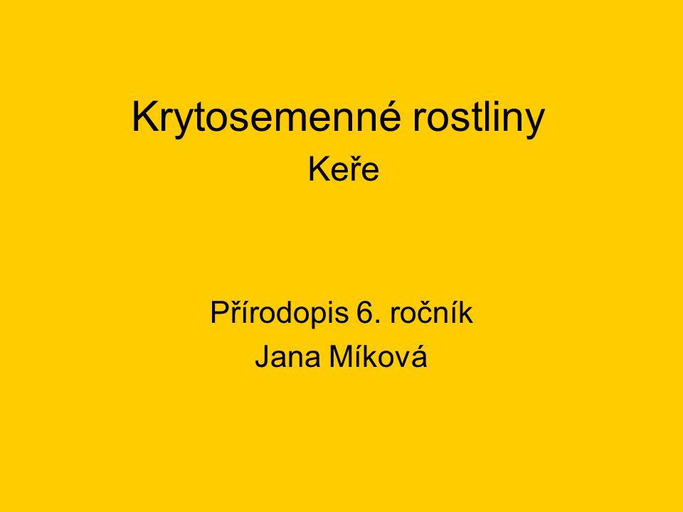 Krytosemenné rostliny Keře Přírodopis 6. ročník Jana Míková
