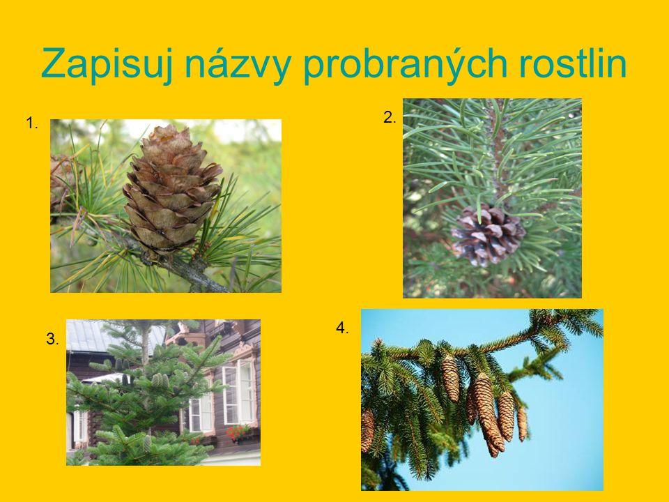 Zapisuj názvy probraných rostlin 1. 2. 3. 4.