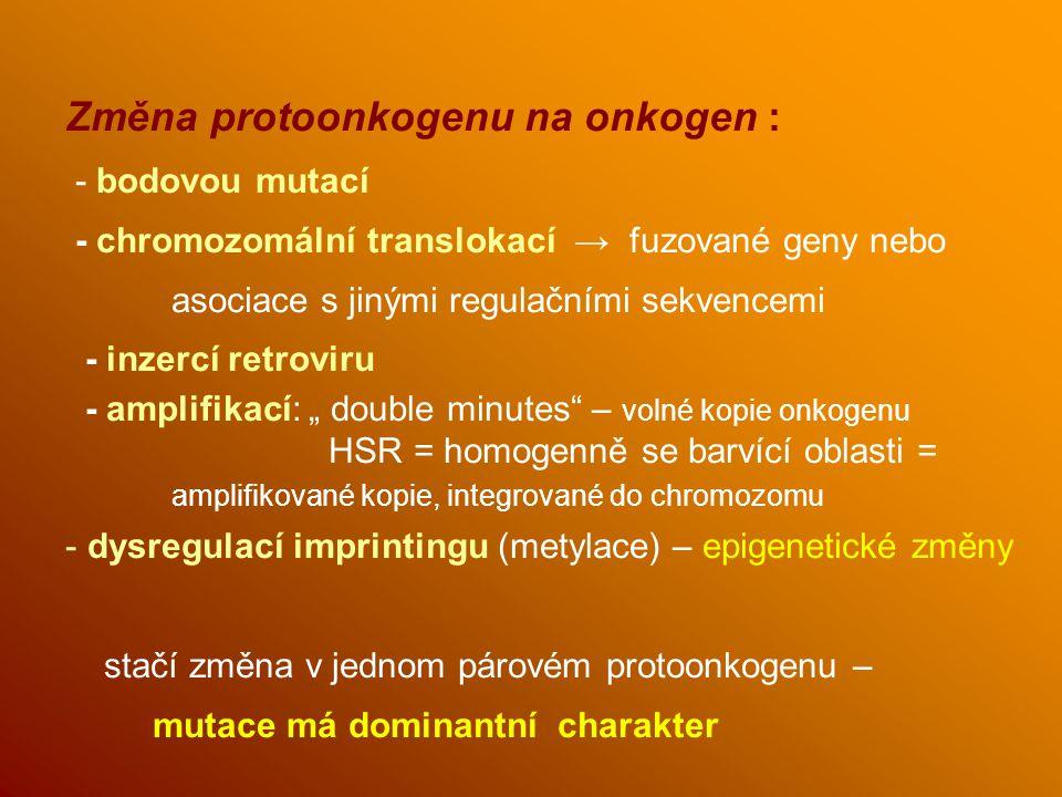 Změna protoonkogenu na onkogen : - bodovou mutací - chromozomální translokací → fuzované geny nebo asociace s jinými regulačními sekvencemi - inzercí