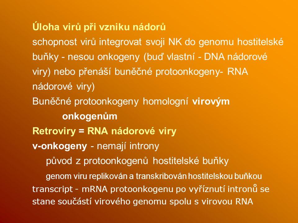 Úloha virů při vzniku nádorů schopnost virů integrovat svoji NK do genomu hostitelské buňky - nesou onkogeny (buď vlastní - DNA nádorové viry) nebo přenáší buněčné protoonkogeny- RNA nádorové viry) Buněčné protoonkogeny homologní virovým onkogenům Retroviry = RNA nádorové viry v-onkogeny - nemají introny původ z protoonkogenů hostitelské buňky genom viru replikován a transkribován hostitelskou buňkou transcript - mRNA protoonkogenu po vyříznutí intronů se stane součástí virového genomu spolu s virovou RNA