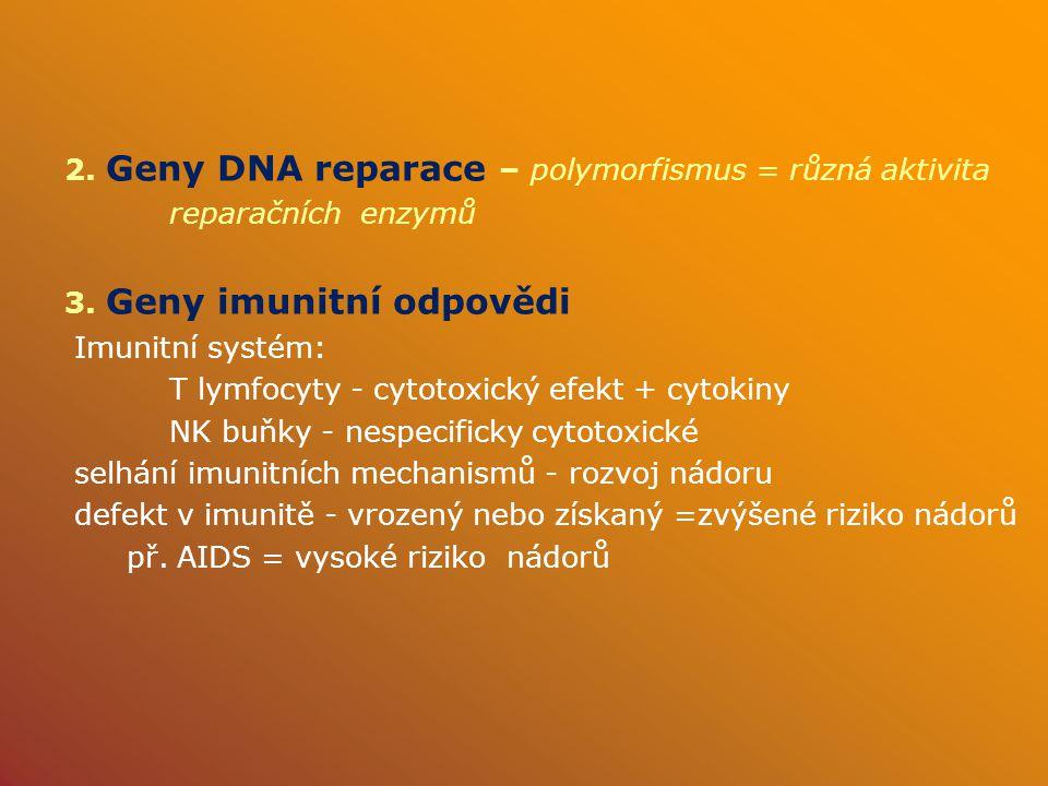 2.Geny DNA reparace – polymorfismus = různá aktivita reparačních enzymů 3.