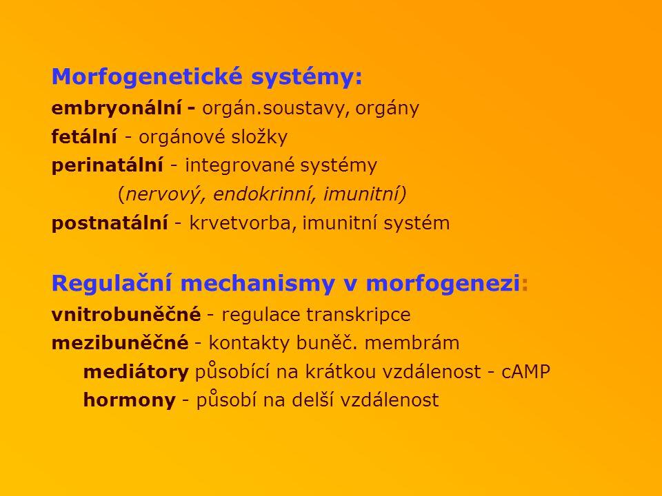Morfogenetické systémy: embryonální - orgán.soustavy, orgány fetální - orgánové složky perinatální - integrované systémy (nervový, endokrinní, imunitní) postnatální - krvetvorba, imunitní systém Regulační mechanismy v morfogenezi: vnitrobuněčné - regulace transkripce mezibuněčné - kontakty buněč.