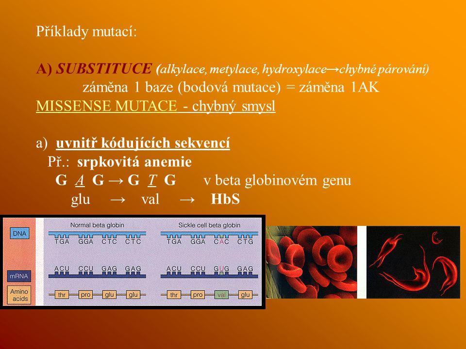 Příklady mutací: A) SUBSTITUCE (alkylace, metylace, hydroxylace→chybné párování) záměna 1 baze (bodová mutace) = záměna 1AK MISSENSE MUTACE - chybný smysl a) uvnitř kódujících sekvencí Př.: srpkovitá anemie G A G → G T G v beta globinovém genu glu → val → HbS