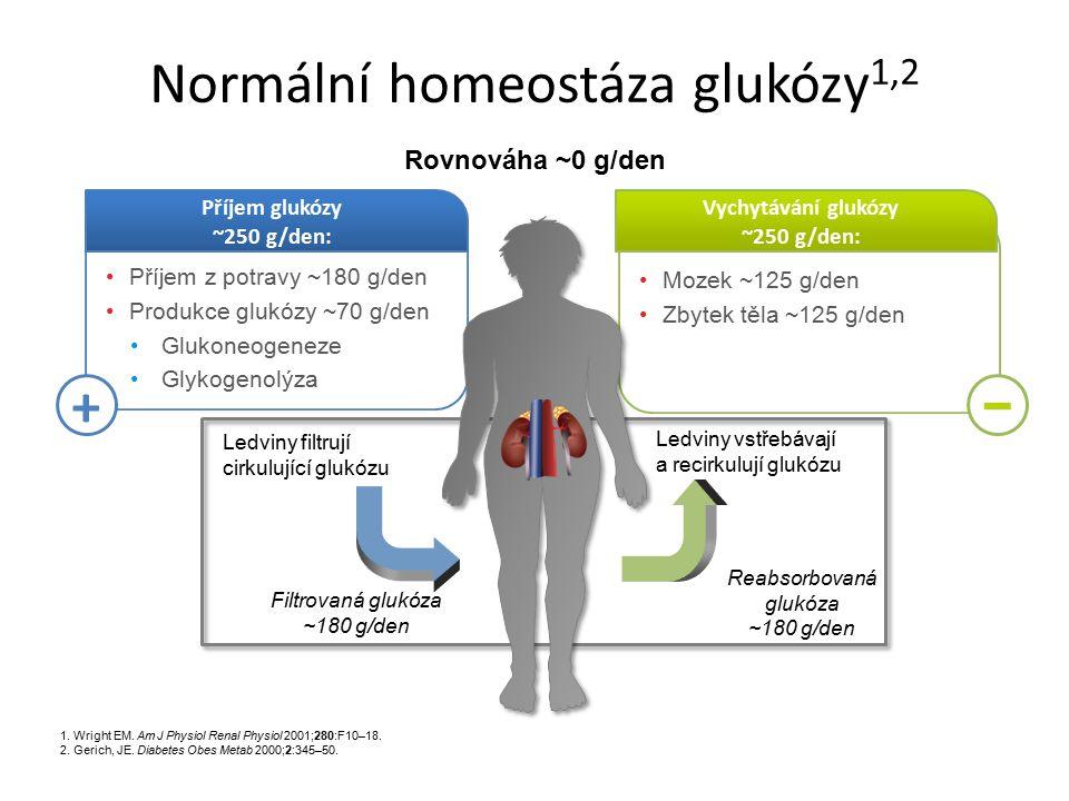 Mozek ~125 g/den Zbytek těla ~125 g/den Vychytávání glukózy ~250 g/den: Příjem z potravy ~180 g/den Produkce glukózy ~70 g/den Glukoneogeneze Glykogen