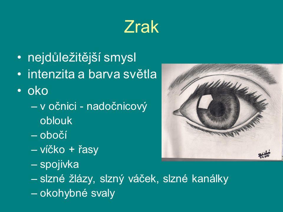 Zrak nejdůležitější smysl intenzita a barva světla oko –v očnici - nadočnicový oblouk –obočí –víčko + řasy –spojivka –slzné žlázy, slzný váček, slzné kanálky –okohybné svaly