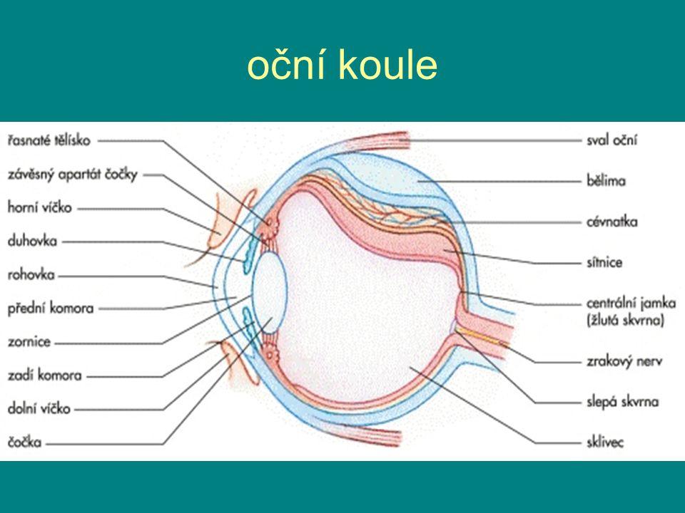 oční koule