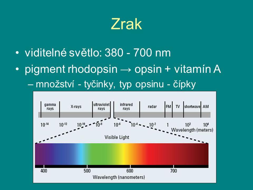 Zrak viditelné světlo: 380 - 700 nm pigment rhodopsin → opsin + vitamín A –množství - tyčinky, typ opsinu - čípky