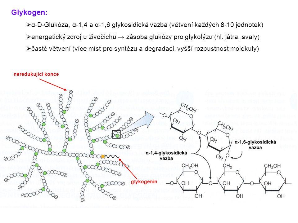 Glykogen:  α-D-Glukóza, α-1,4 a α-1,6 glykosidická vazba (větvení každých 8-10 jednotek)  energetický zdroj u živočichů → zásoba glukózy pro glykolý