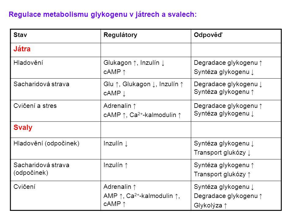 StavRegulátoryOdpověď Játra HladověníGlukagon ↑, Inzulín ↓ cAMP ↑ Degradace glykogenu ↑ Syntéza glykogenu ↓ Sacharidová stravaGlu ↑, Glukagon ↓, Inzul