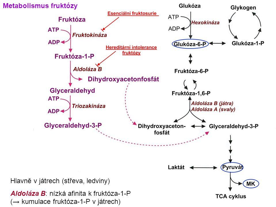 Metabolismus fruktózy Hlavně v játrech (střeva, ledviny) Aldoláza B: nízká afinita k fruktóza-1-P (→ kumulace fruktóza-1-P v játrech)