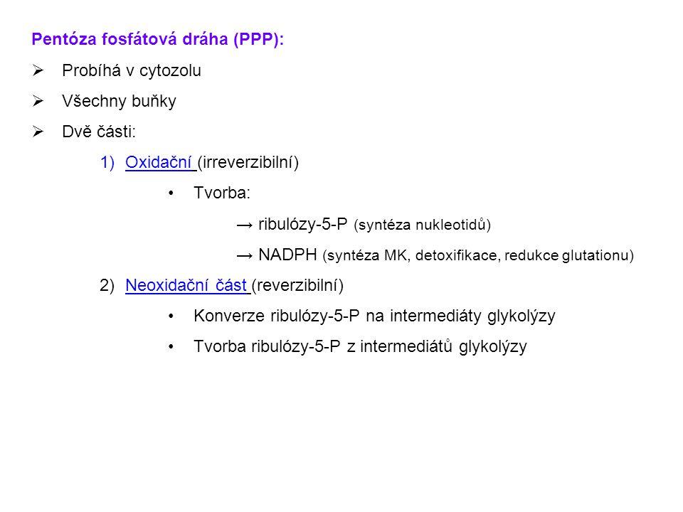 Pentóza fosfátová dráha (PPP):  Probíhá v cytozolu  Všechny buňky  Dvě části: 1)Oxidační (irreverzibilní) Tvorba: → ribulózy-5-P (syntéza nukleotid