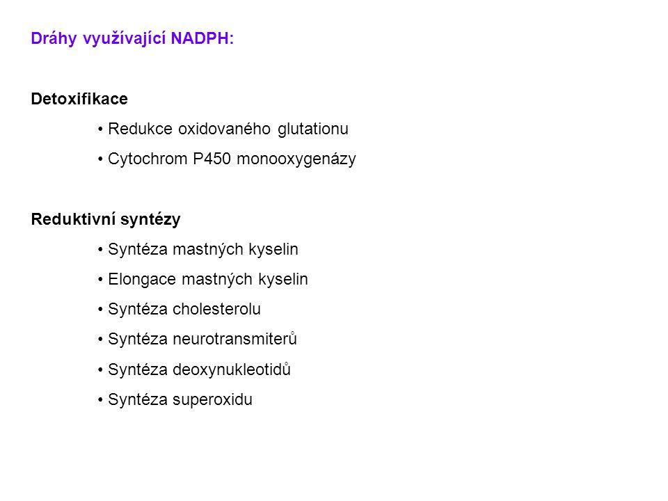 Dráhy využívající NADPH: Detoxifikace Redukce oxidovaného glutationu Cytochrom P450 monooxygenázy Reduktivní syntézy Syntéza mastných kyselin Elongace