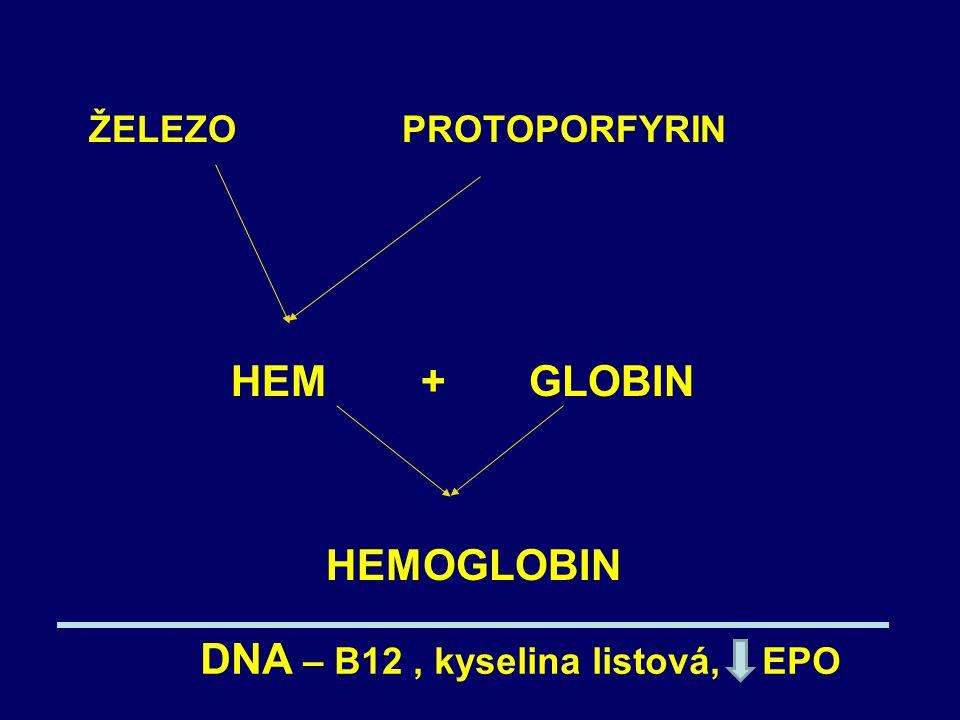 ŽELEZO PROTOPORFYRIN HEM + GLOBIN HEMOGLOBIN DNA – B12, kyselina listová, EPO