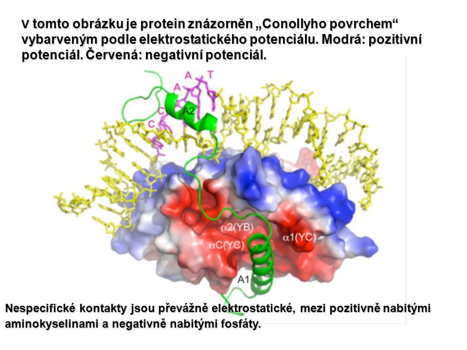 """V tomto obrázku je protein znázorněn """"Conollyho povrchem vybarveným podle elektrostatického potenciálu."""