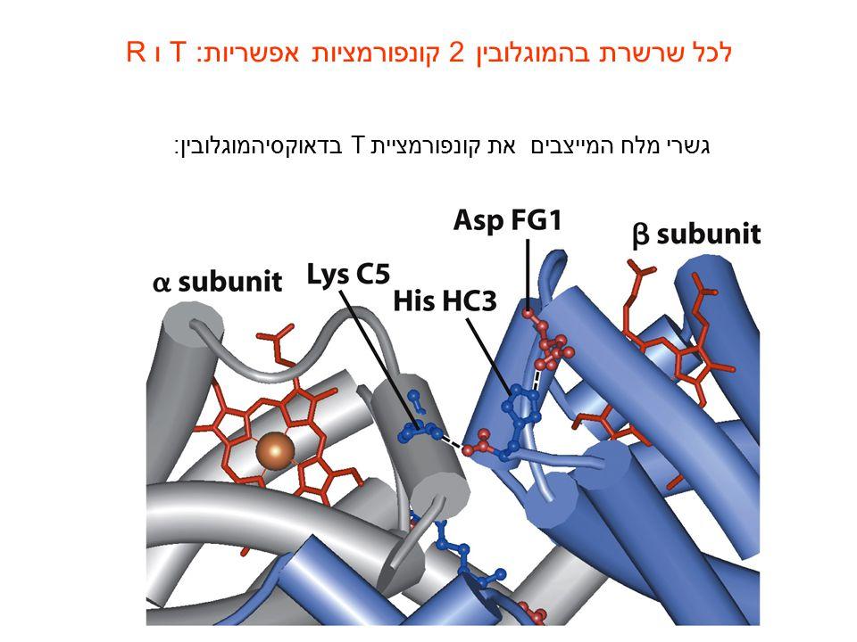 גשרי מלח המייצבים את קונפורמציית T בדאוקסיהמוגלובין: לכל שרשרת בהמוגלובין 2 קונפורמציות אפשריות: T ו R
