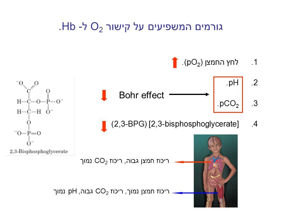 גורמים המשפיעים על קישור O 2 ל- Hb. 1.לחץ החמצן (pO 2 ). 2.pH. 3.pCO 2. 4.[2,3-bisphosphoglycerate] (2,3-BPG) Bohr effect ריכוז חמצן גבוה, ריכוז CO 2