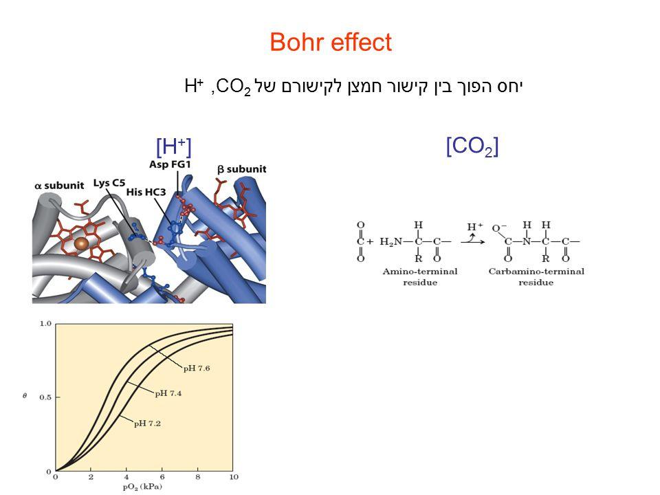 Bohr effect יחס הפוך בין קישור חמצן לקישורם של,CO 2 + H [H + ] [CO 2 ]