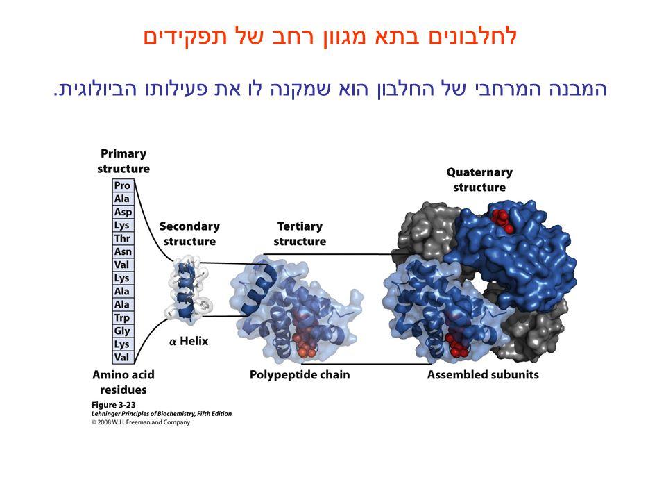 לחלבונים בתא מגוון רחב של תפקידים המבנה המרחבי של החלבון הוא שמקנה לו את פעילותו הביולוגית.