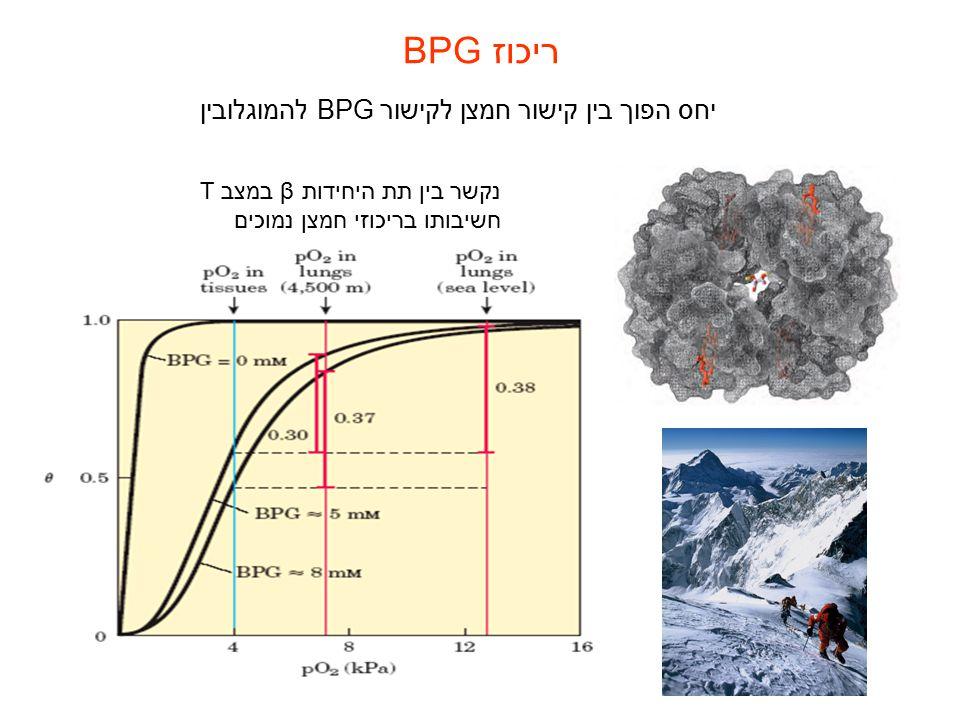 ריכוז BPG יחס הפוך בין קישור חמצן לקישור BPGלהמוגלובין נקשר בין תת היחידות β במצב T חשיבותו בריכוזי חמצן נמוכים