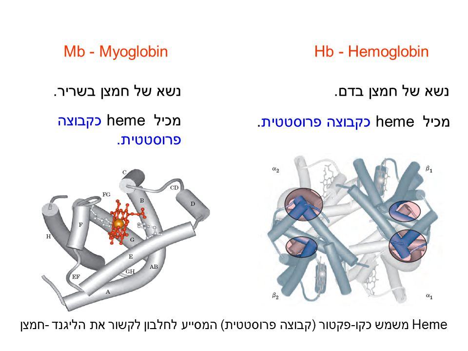 Mb - MyoglobinHb - Hemoglobin נשא של חמצן בשריר.נשא של חמצן בדם. מכיל heme כקבוצה פרוסטטית. Heme משמש כקו-פקטור (קבוצה פרוסטטית) המסייע לחלבון לקשור א