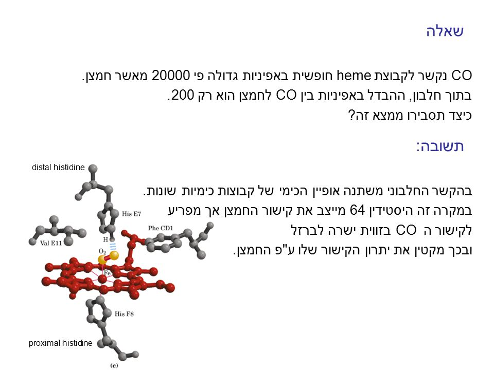 שאלה CO נקשר לקבוצת heme חופשית באפיניות גדולה פי 20000 מאשר חמצן. בתוך חלבון, ההבדל באפיניות בין CO לחמצן הוא רק 200. כיצד תסבירו ממצא זה? תשובה: בהק
