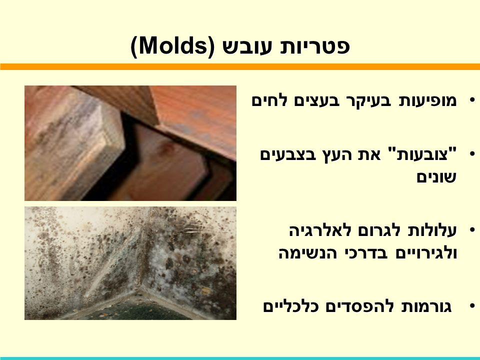 פטריות עובש (Molds) מופיעות בעיקר בעצים לחיםמופיעות בעיקר בעצים לחים