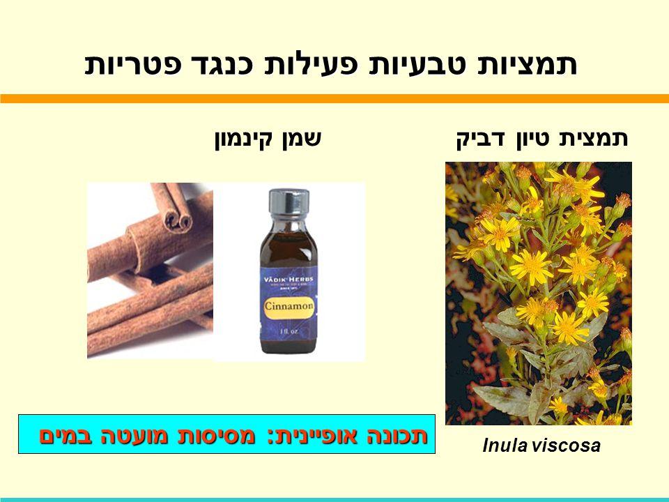 תמציות טבעיות פעילות כנגד פטריות שמן קינמוןתמצית טיון דביק Inula viscosa תכונה אופיינית: מסיסות מועטה במים