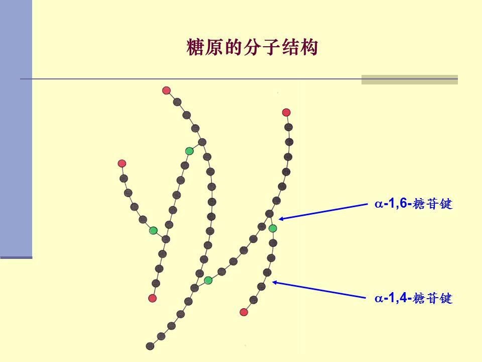  -1,4- 糖苷键  -1,6- 糖苷键 糖原的分子结构