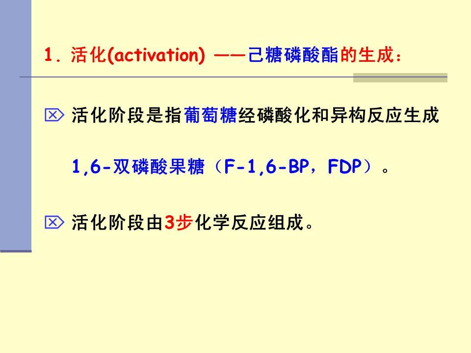 1. 活化 (activation) —— 己糖磷酸酯的生成:   活化阶段是指葡萄糖经磷酸化和异构反应生成 1,6- 双磷酸果糖( F-1,6-BP , FDP )。   活化阶段由 3 步化学反应组成。