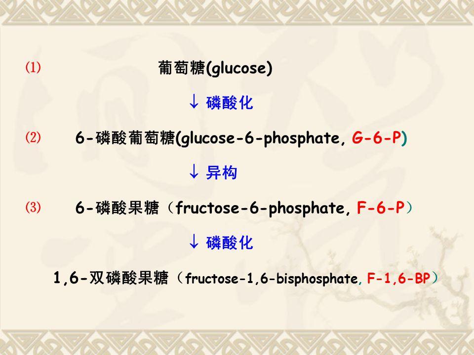 ⑴ 葡萄糖 (glucose)  磷酸化 ⑵ 6- 磷酸葡萄糖 (glucose-6-phosphate, G-6-P)  异构 ⑶ 6- 磷酸果糖( fructose-6-phosphate, F-6-P )  磷酸化 1,6- 双磷酸果糖( fructose-1,6-bisphosphat