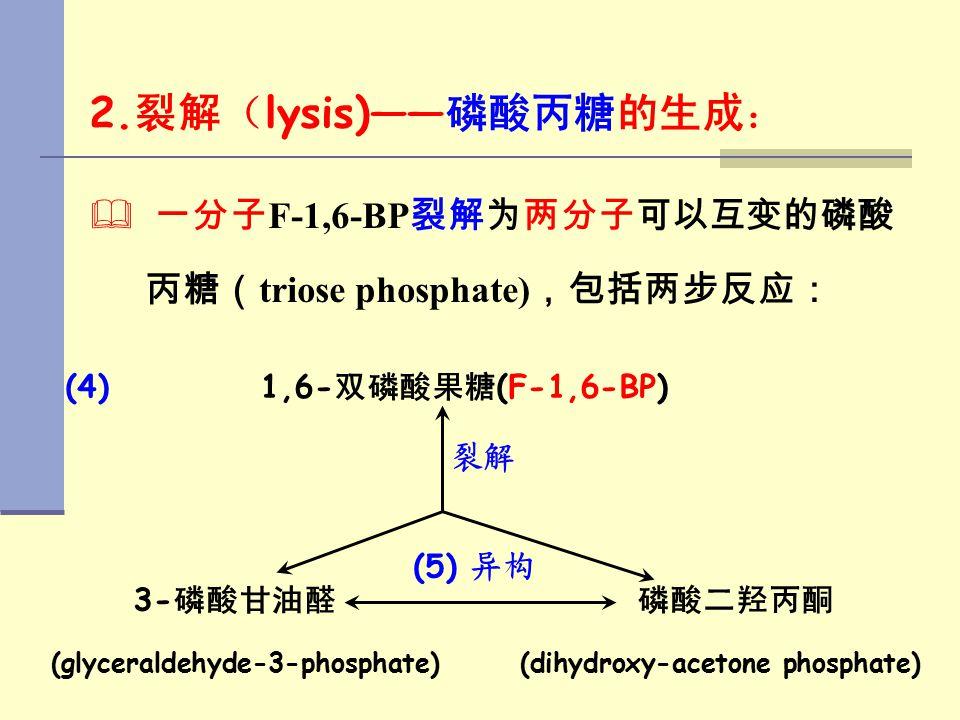 2. 裂解( lysis)—— 磷酸丙糖的生成:   一分子 F-1,6-BP 裂解为两分子可以互变的磷酸 丙糖( triose phosphate) ,包括两步反应: (4) 1,6- 双磷酸果糖 (F-1,6-BP) 裂解 3- 磷酸甘油醛 磷酸二羟丙酮 (glyceraldehyde-3-