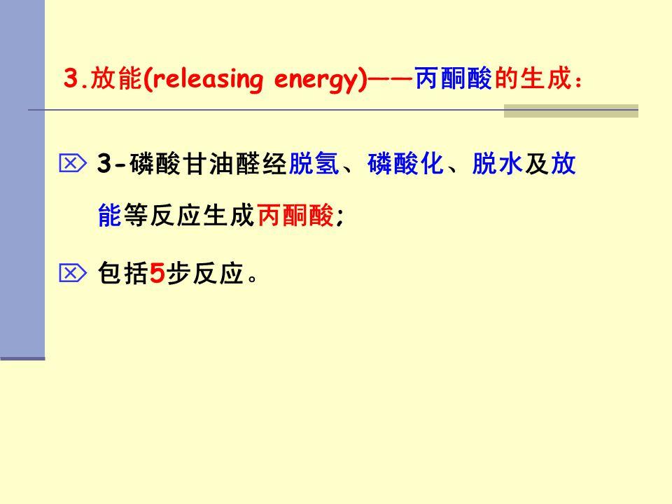 3. 放能 (releasing energy)—— 丙酮酸的生成:   3- 磷酸甘油醛经脱氢、磷酸化、脱水及放 能等反应生成丙酮酸 ;   包括 5 步反应。
