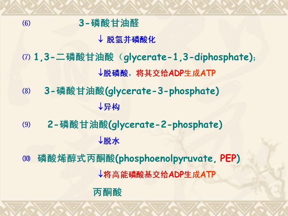 ⑹ 3- 磷酸甘油醛  脱氢并磷酸化 ⑺ 1,3- 二磷酸甘油酸( glycerate-1,3-diphosphate) ;  脱磷酸,将其交给 ADP 生成 ATP ⑻ 3- 磷酸甘油酸 (glycerate-3-phosphate)  异构 ⑼ 2- 磷酸甘油酸 (glycerate-2-