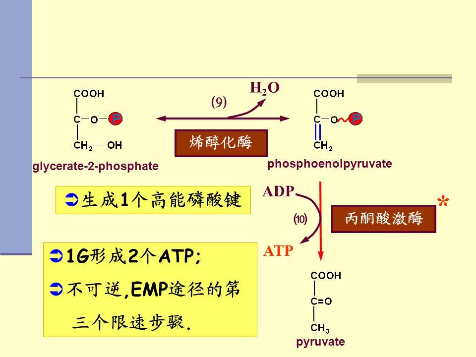 glycerate-2-phosphate 烯醇化酶 ⑼ H2OH2O phosphoenolpyruvate 丙酮酸激酶 ⑽ * ATP ADP pyruvate   生成 1 个高能磷酸键   1G 形成 2 个 ATP;   不可逆,EMP 途径的第 三个限速步骤.