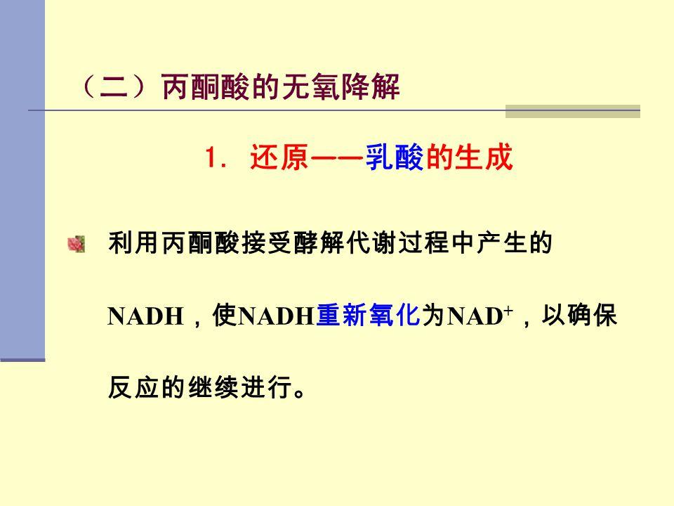 (二)丙酮酸的无氧降解 1. 还原 —— 乳酸的生成 利用丙酮酸接受酵解代谢过程中产生的 NADH ,使 NADH 重新氧化为 NAD + ,以确保 反应的继续进行。