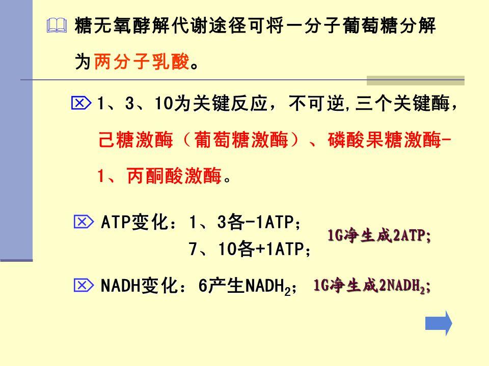   糖无氧酵解代谢途径可将一分子葡萄糖分解 为两分子乳酸。  1、3、10为关键反应,不可逆,  1、3、10为关键反应,不可逆,三个关键酶, 己糖激酶(葡萄糖激酶)、磷酸果糖激酶- 1、丙酮酸激酶。  ATP变化:1、3各-1ATP; 7、10各+1ATP; 7、10各+1ATP; 