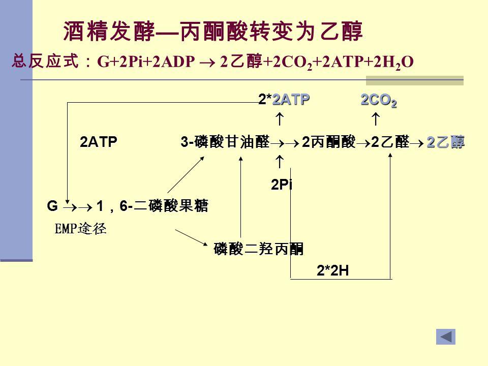 酒精发酵 — 丙酮酸转变为乙醇 总反应式: G+2Pi+2ADP  2 乙醇 +2CO 2 +2ATP+2H 2 O 2*2ATP 2CO 2 2*2ATP 2CO 2     2ATP 3- 磷酸甘油醛  2 丙酮酸  2 乙醛  2 乙醇 2ATP 3- 磷酸甘油醛  2