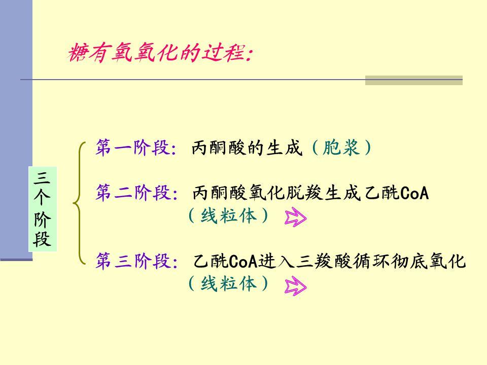 糖有氧氧化的过程: 第一阶段:丙酮酸的生成(胞浆) 第二阶段:丙酮酸氧化脱羧生成乙酰 CoA (线粒体) 第三阶段:乙酰 CoA 进入三羧酸循环彻底氧化 (线粒体)