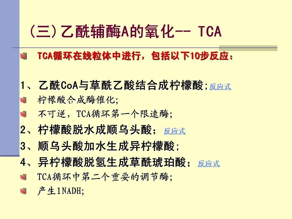 (三)乙酰辅酶A的氧化-- TCA TCA循环在线粒体中进行,包括以下10步反应: 1、乙酰CoA与草酰乙酸结合成柠檬酸; 反应式 反应式 柠檬酸合成酶催化; 不可逆,TCA循环第一个限速酶; 2、柠檬酸脱水成顺乌头酸; 反应式 反应式 3、顺乌头酸加水生成异柠檬酸; 4、异柠檬酸脱氢生成草酰琥珀酸
