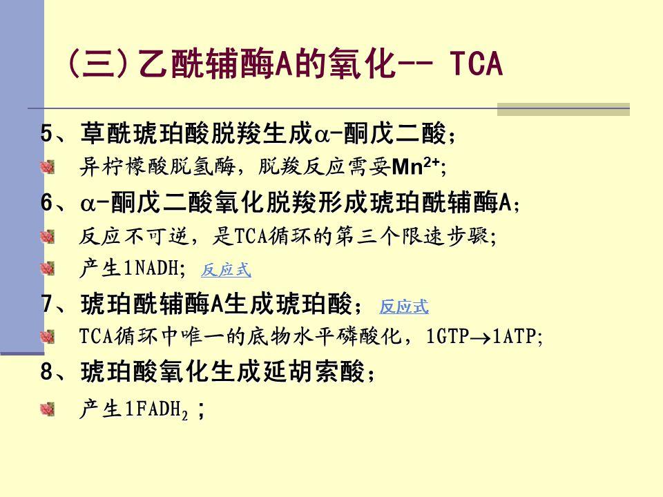 (三)乙酰辅酶A的氧化-- TCA 5、草酰琥珀酸脱羧生成  -酮戊二酸; 异柠檬酸脱氢酶,脱羧反应需要 Mn 2+ ; 6、  -酮戊二酸氧化脱羧形成琥珀酰辅酶A; 反应不可逆,是TCA循环的第三个限速步骤; 产生1NADH; 反应式 反应式 7、琥珀酰辅酶A生成琥珀酸; 反应式 反应式 TC