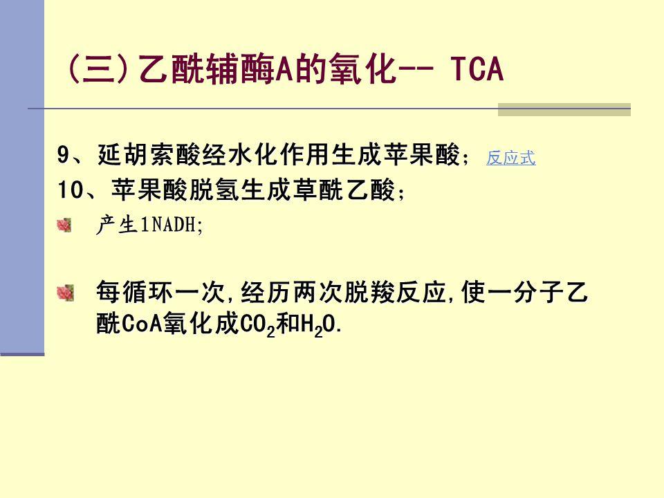 (三)乙酰辅酶A的氧化-- TCA 9、延胡索酸经水化作用生成苹果酸; 反应式 反应式 10、苹果酸脱氢生成草酰乙酸; 产生1NADH; 每循环一次,经历两次脱羧反应,使一分子乙 酰CoA氧化成CO 2 和H 2 O.