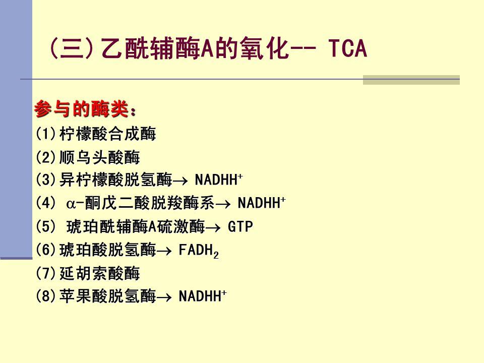 (三)乙酰辅酶A的氧化-- TCA 参与的酶类: (1)柠檬酸合成酶 (2)顺乌头酸酶 (3)异柠檬酸脱氢酶  NADHH + (4)  -酮戊二酸脱羧酶系  NADHH + (5) 琥珀酰辅酶A硫激酶  GTP (6)琥珀酸脱氢酶  FADH 2 (7)延胡索酸酶 (8)苹果酸脱氢酶 