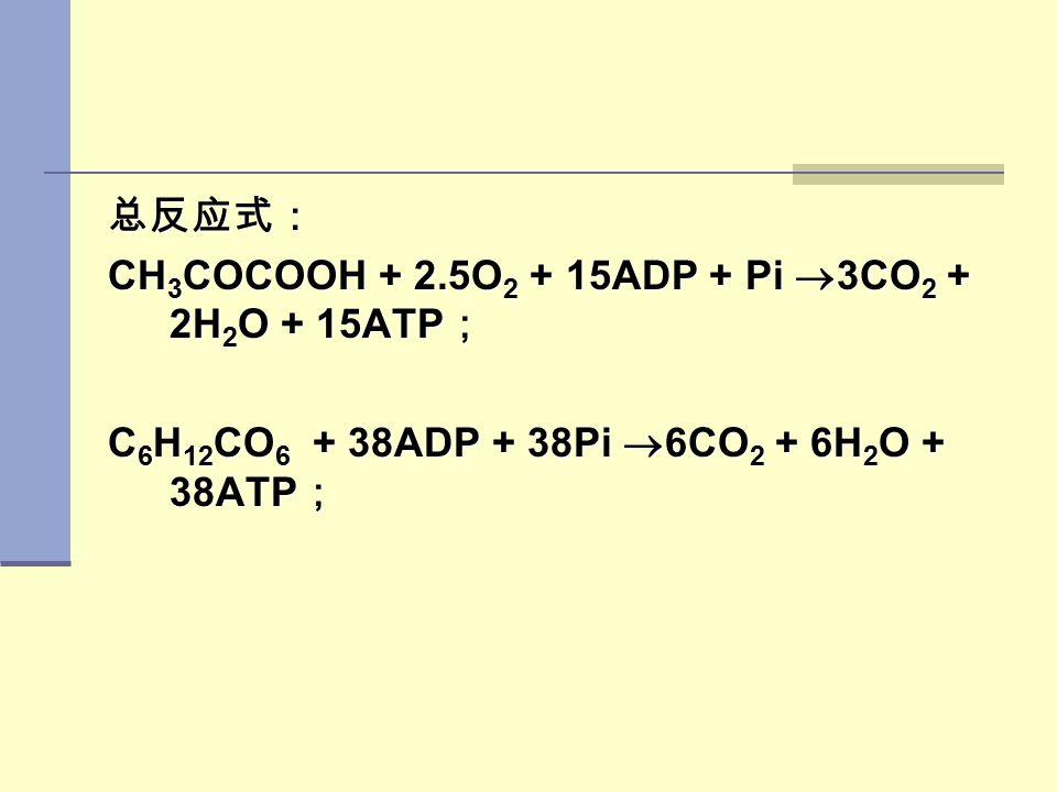 总反应式: CH 3 COCOOH + 2.5O 2 + 15ADP + Pi  3CO 2 + 2H 2 O + 15ATP ; C 6 H 12 CO 6 + 38ADP + 38Pi  6CO 2 + 6H 2 O + 38ATP ;