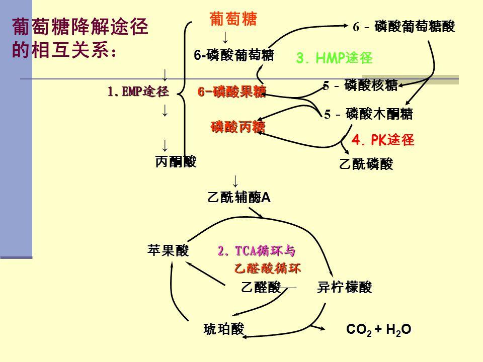 葡萄糖降解途径 的相互关系: 6- 磷酸葡萄糖 6- 磷酸葡萄糖 ↓ 1.EMP途径 6-磷酸果糖 1.EMP途径 6-磷酸果糖 ↓ 磷酸丙糖 磷酸丙糖 ↓ 丙酮酸 丙酮酸 ↓ 乙酰辅酶 A 乙酰辅酶 A 苹果酸 2. TCA循环与 苹果酸 2. TCA循环与 乙醛酸循环 乙醛酸循环 乙醛酸 异柠檬