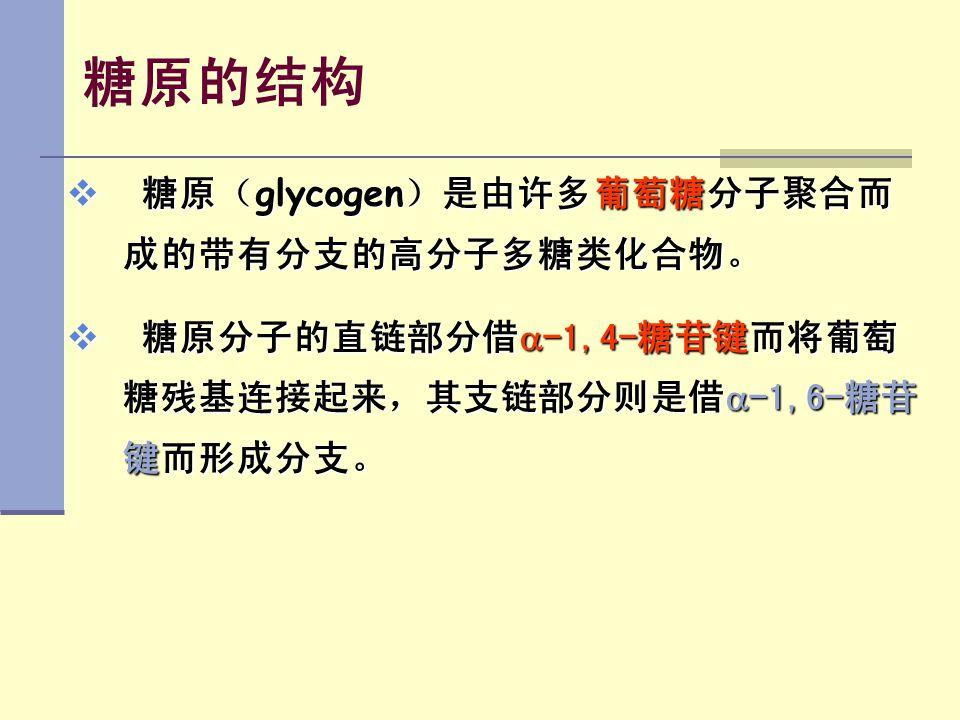 糖原的结构  糖原( glycogen )是由许多葡萄糖分子聚合而 成的带有分支的高分子多糖类化合物。  糖原分子的直链部分借  -1,4-糖苷键而将葡萄 糖残基连接起来,其支链部分则是借  -1,6-糖苷 键而形成分支。