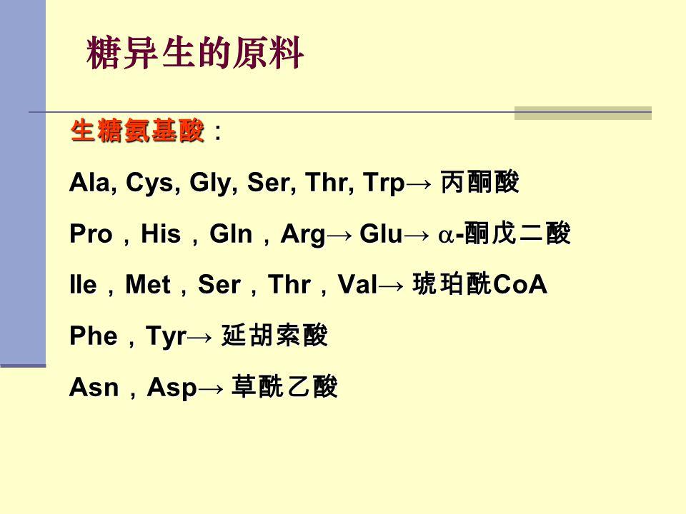糖异生的原料 生糖氨基酸: Ala, Cys, Gly, Ser, Thr, Trp→ 丙酮酸 Pro , His , Gln , Arg→ Glu→  - 酮戊二酸 Ile , Met , Ser , Thr , Val→ 琥珀酰 CoA Phe , Tyr→ 延胡索酸 Asn , Asp→ 草