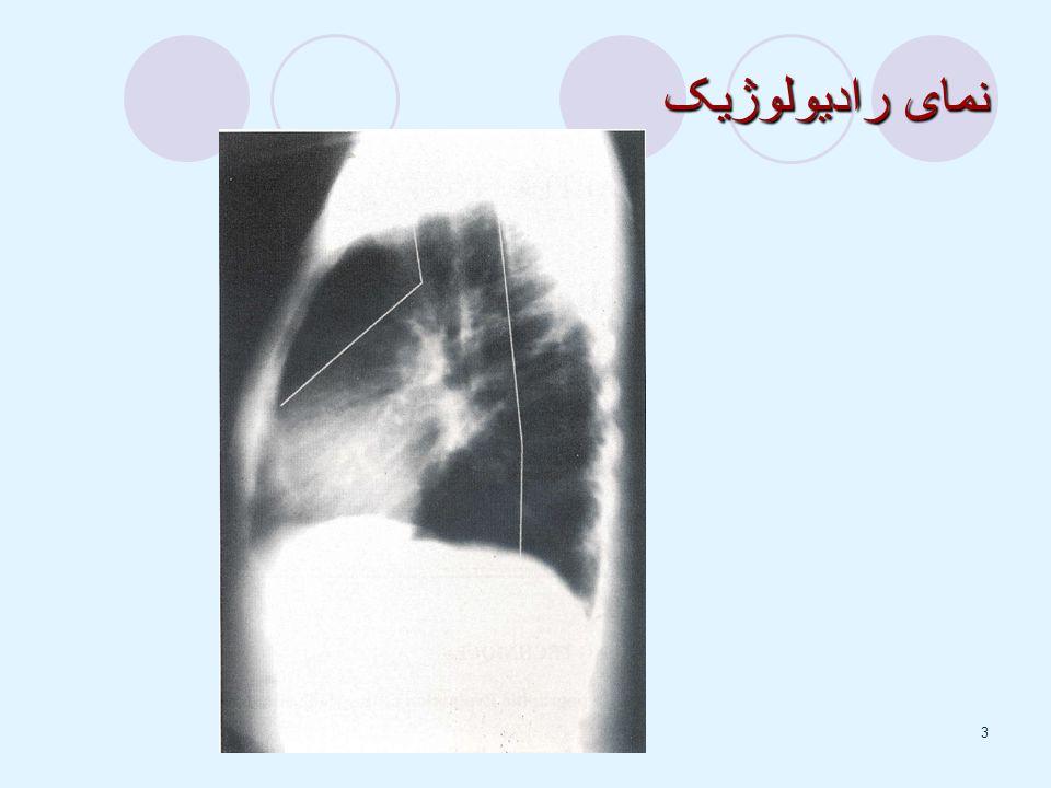 3 نمای رادیولوژیک
